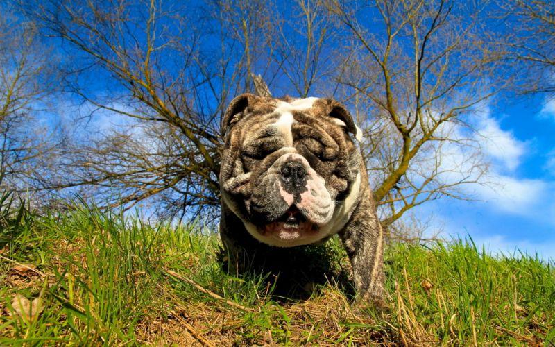 dog muzzle summer wallpaper