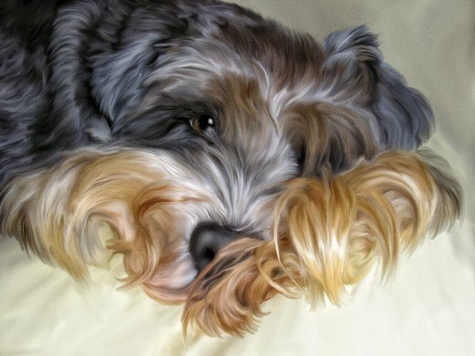 dog shaggy Photoshop wallpaper