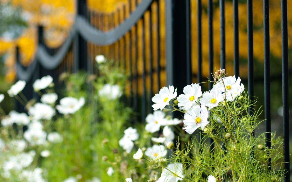 fence gates flowers macro wallpaper