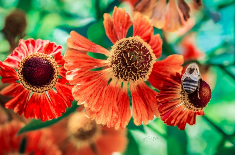 Flowers Orange wallpaper