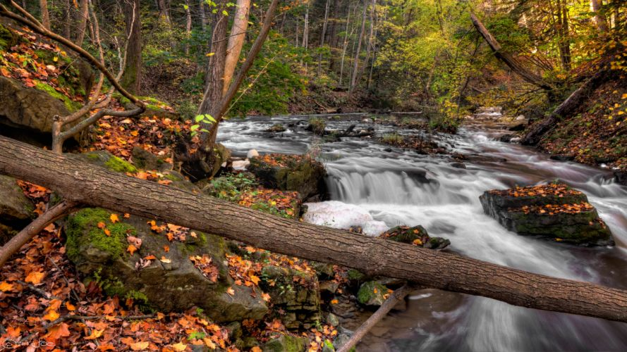 forest river autumn trees nature wallpaper