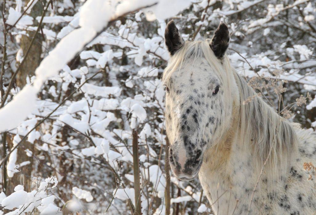 horse head face winter wallpaper
