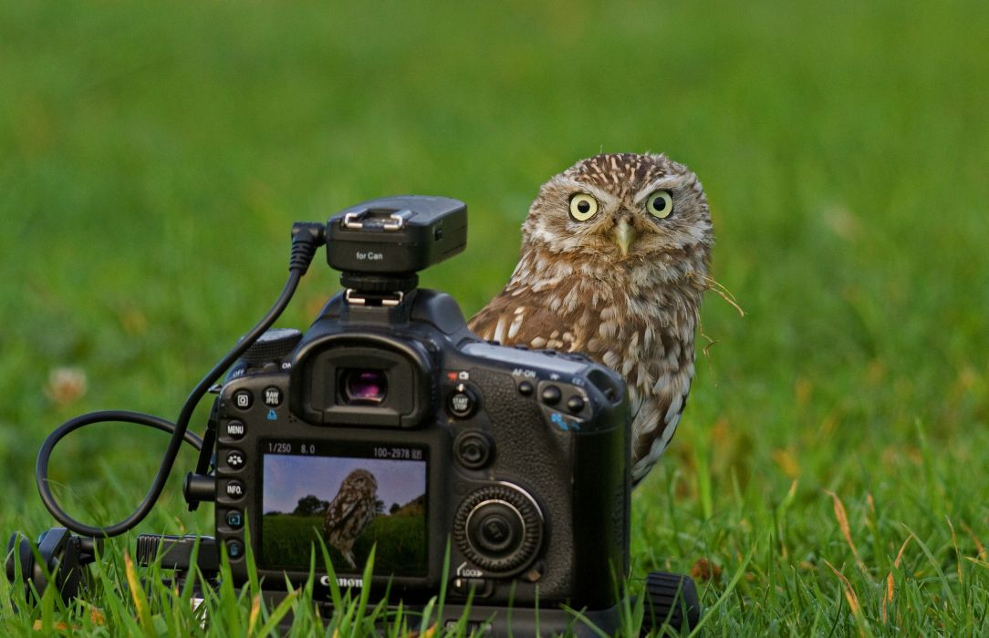 owl camera Canon wallpaper