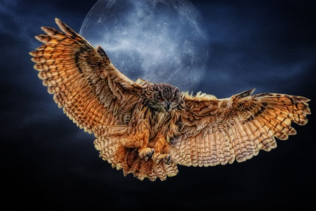 owl wings moon Photoshop wallpaper