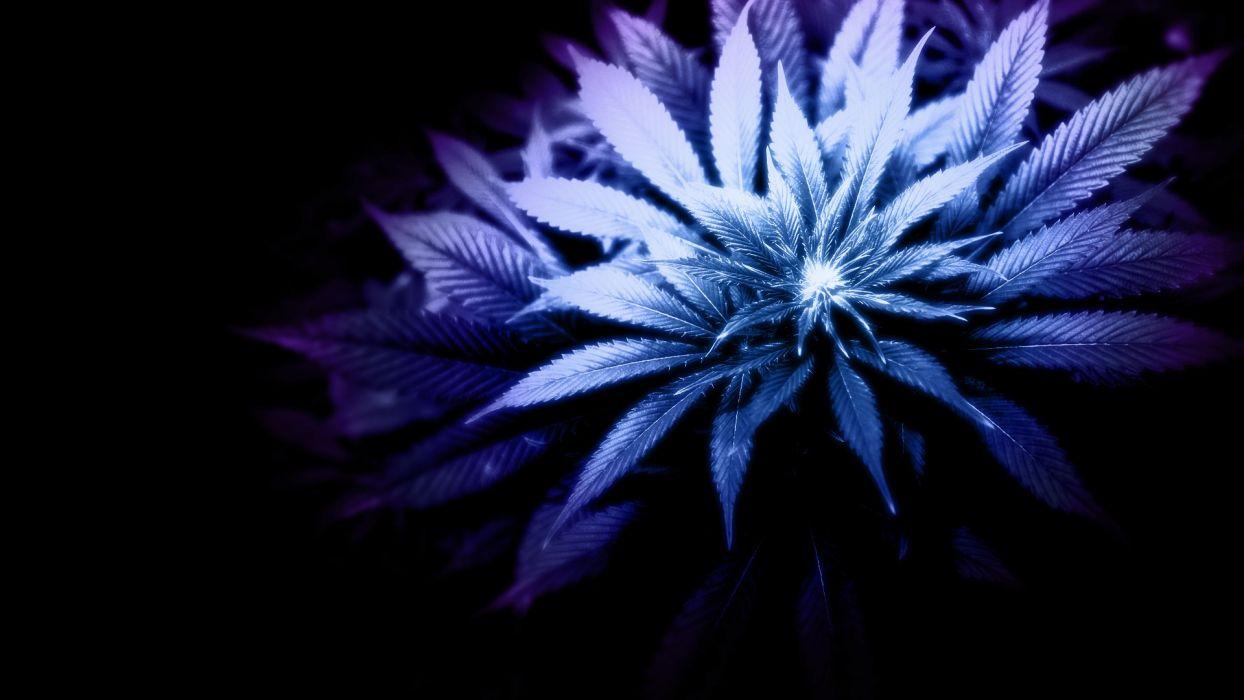 marijuana weed 420 ganja   e4 wallpaper