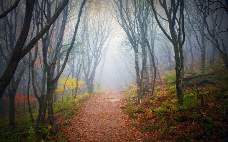 autumn forest road fog landscape wallpaper
