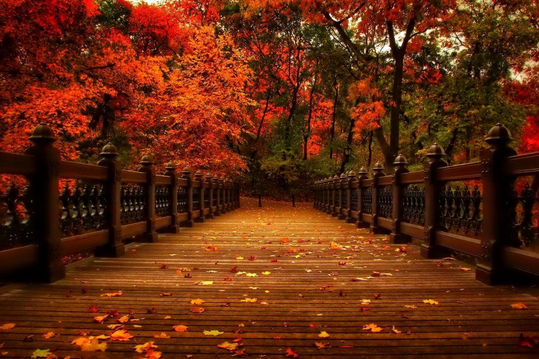 autumn nature park trees leaves alley autumn view walk nature park trees leaves alley wallpaper