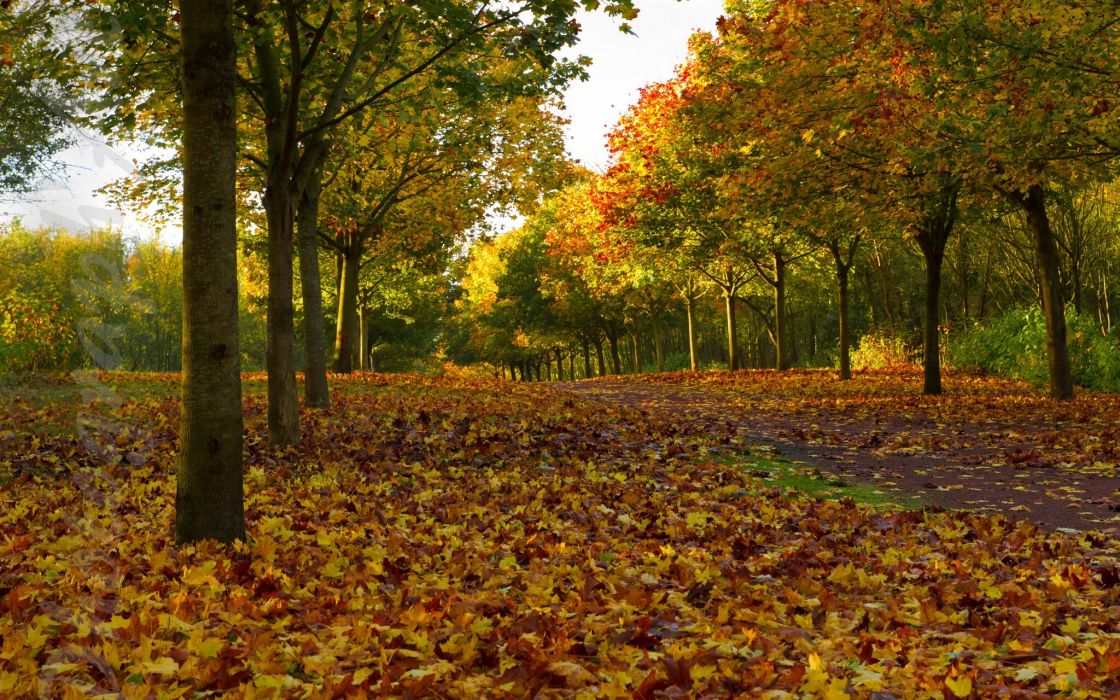 trees alley leaves autumn wallpaper