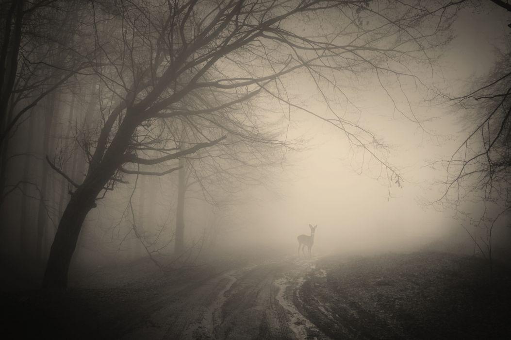 trees creepy landscape forest misty forest nature deer wallpaper