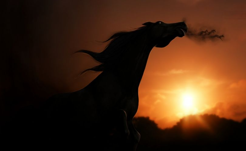 sunset view horse rendering shadow wallpaper