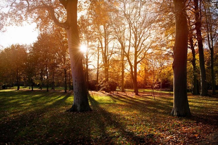 sunset nature autumn trees park wallpaper