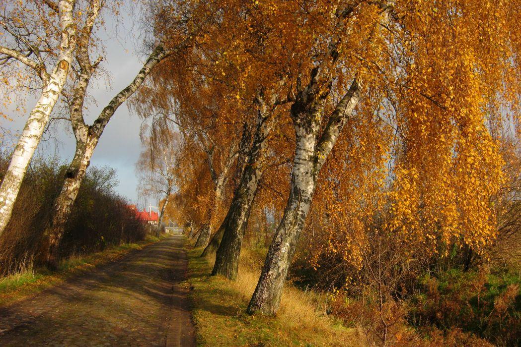 Seasons Autumn Roads Birch Trees Nature wallpaper