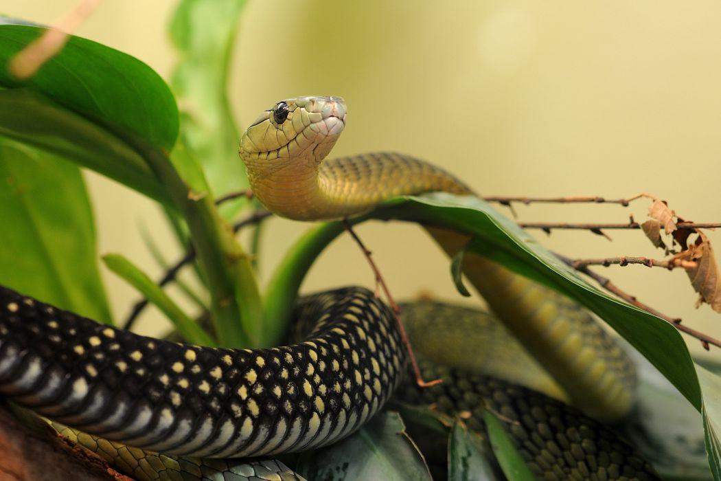 snake leaves macro wallpaper