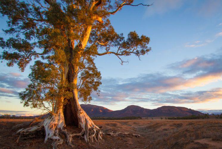 Scenery Australia Sky Port Lincoln South Trees Nature wallpaper