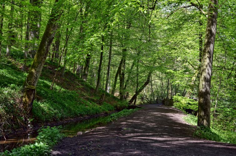 road forest trees nature wallpaper