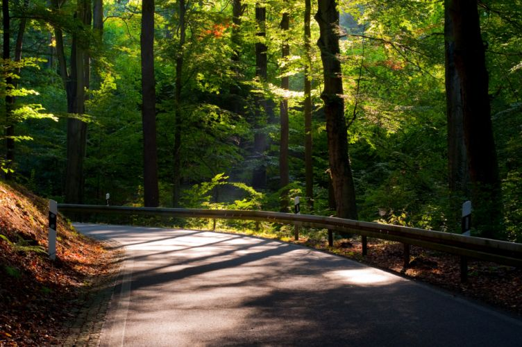 Roads Forests Nature wallpaper