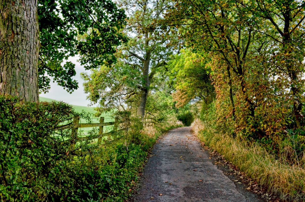 road trees fence nature wallpaper
