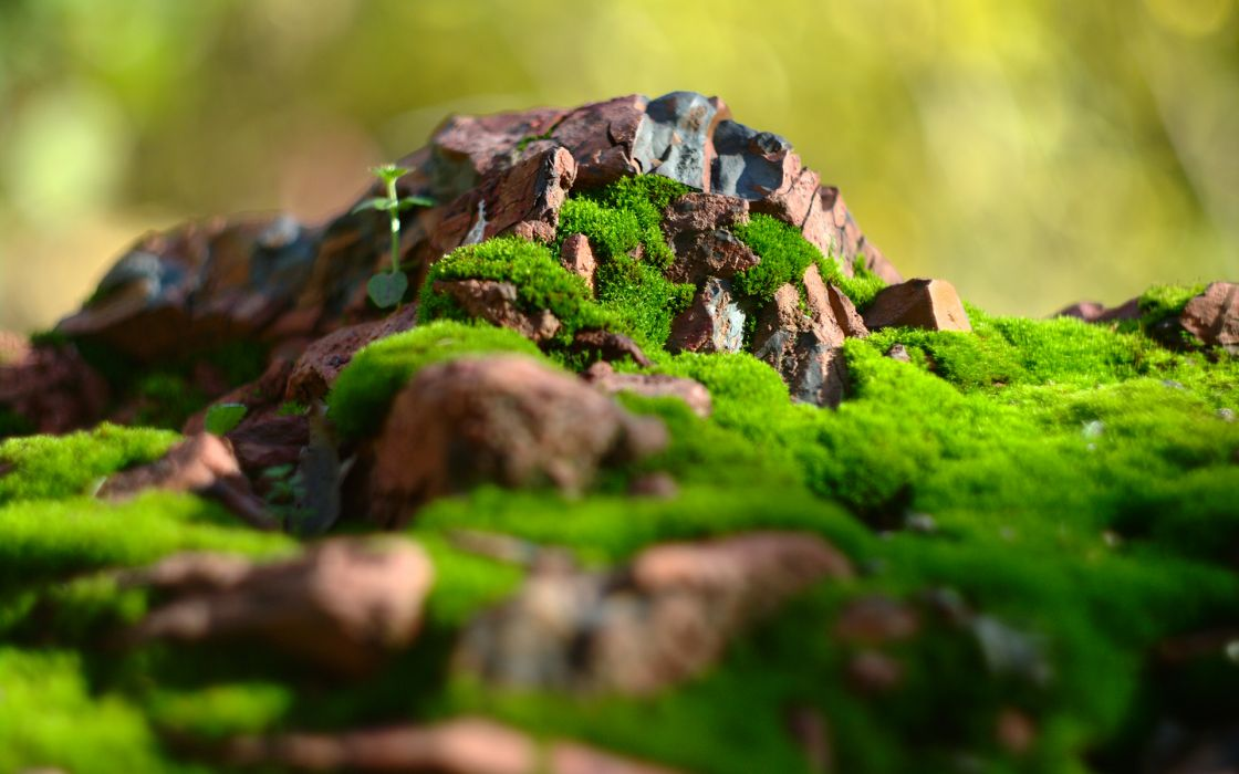 Rocks Stones Macro Moss wallpaper