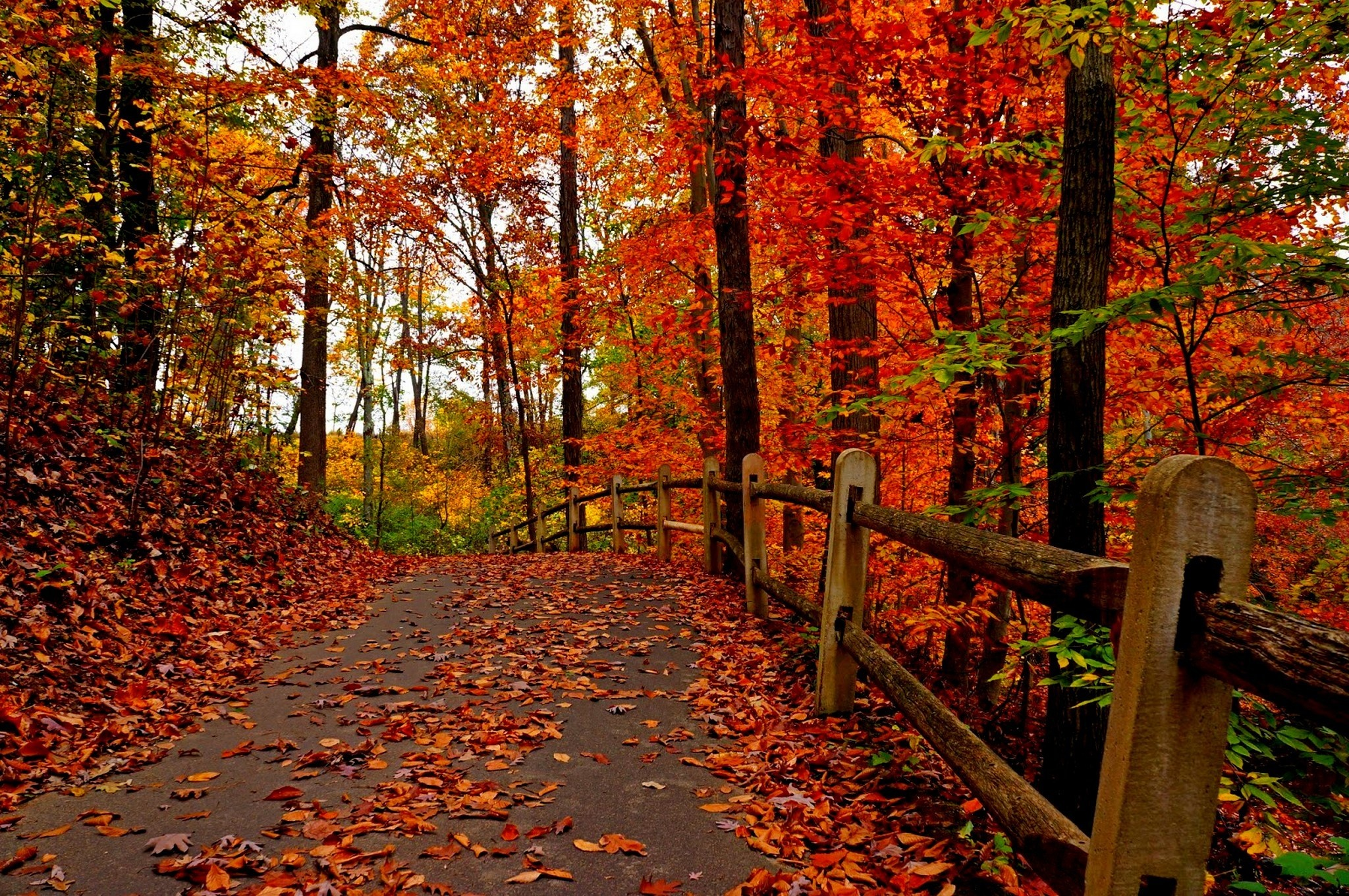 Nature trees colorful road autumn path forest leaves park