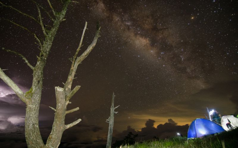 Night Trees Galaxy Milky Way Stars wallpaper