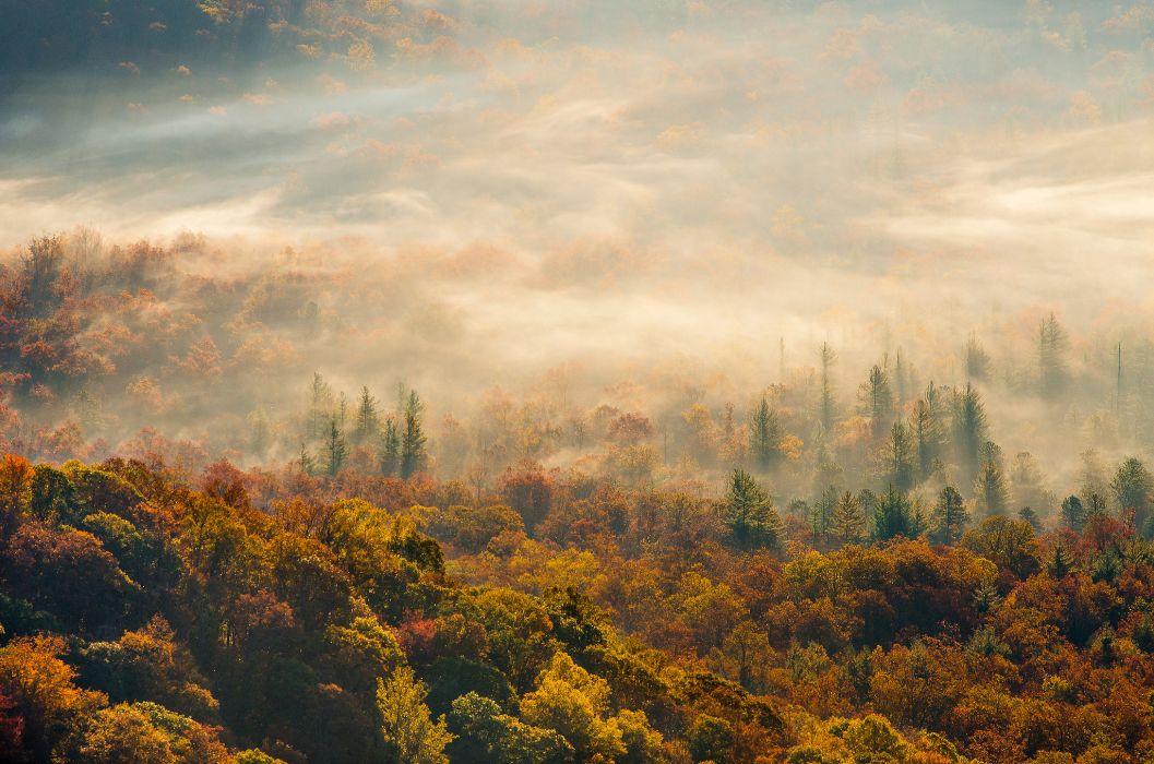 morning fog forest autumn wallpaper