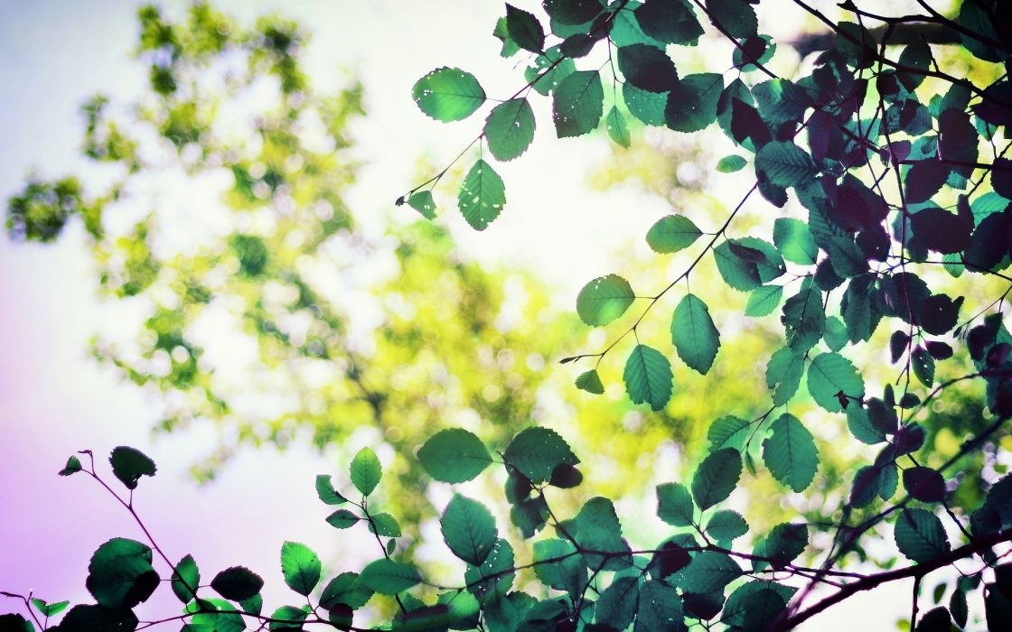 Nature Foliage Branches wallpaper