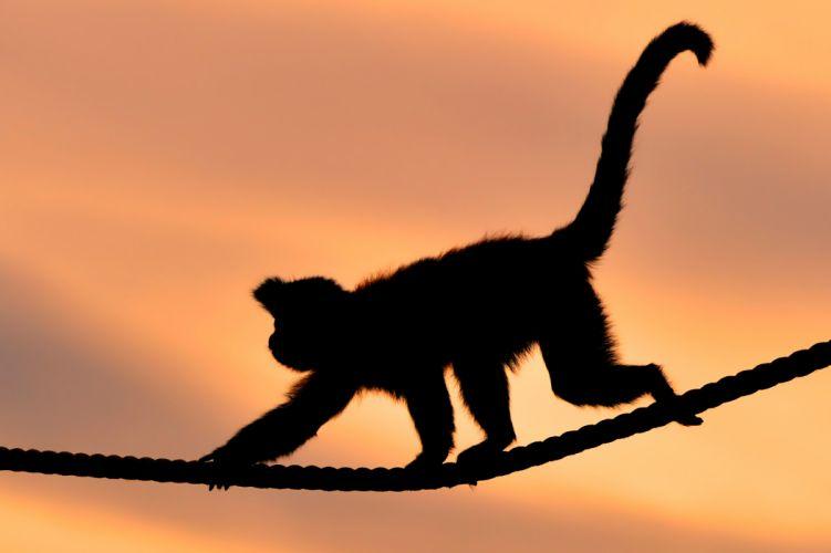 monkey rope sunset s wallpaper