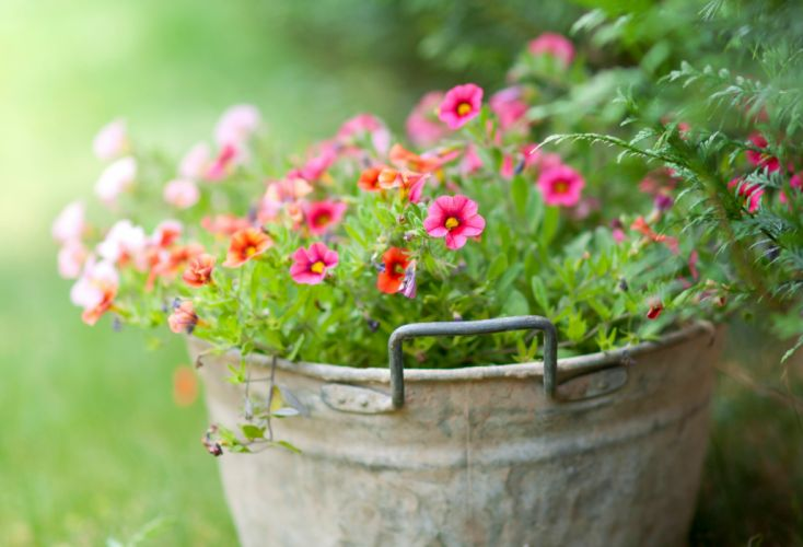 bucket flowers soft green wallpaper