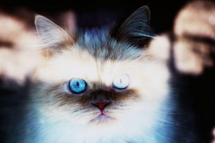 cat muzzle animal wallpaper