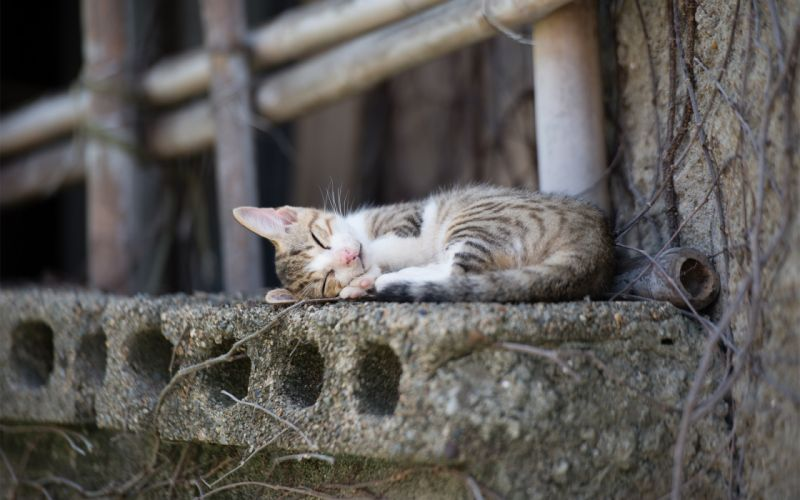 Cats Sleep Animals wallpaper