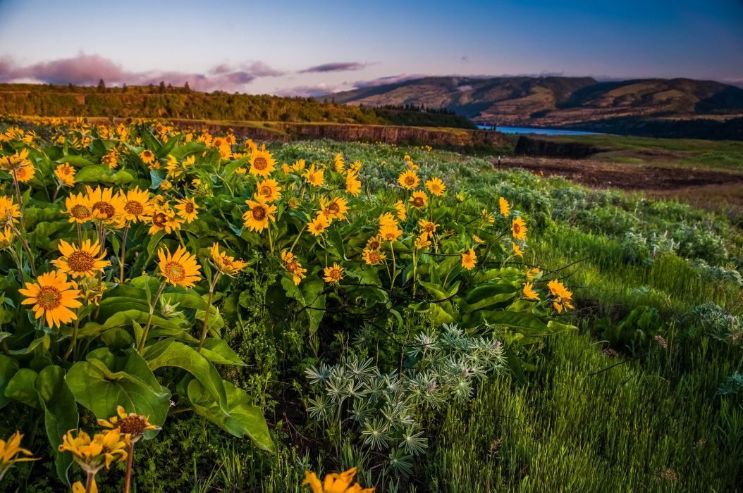 Columbia Gorge Oregon hills flowers landscape wallpaper