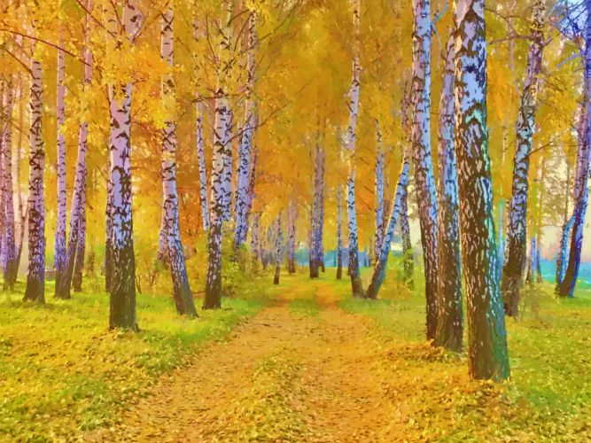 drawing nature landscape autumn road yellow leaves and birch wallpaper