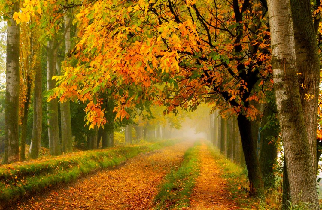 fall colors walk leaves autumn nature trees road forest park wallpaper