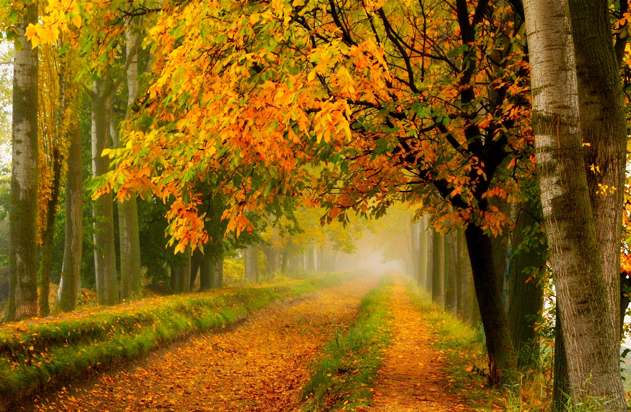 Fall colors walk leaves autumn nature trees road forest for Wallpaper walk