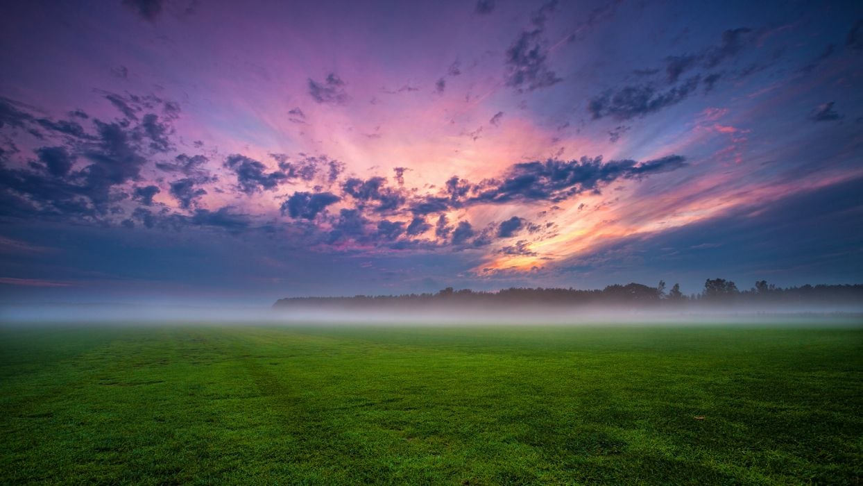 field grass fog trees Germany wallpaper