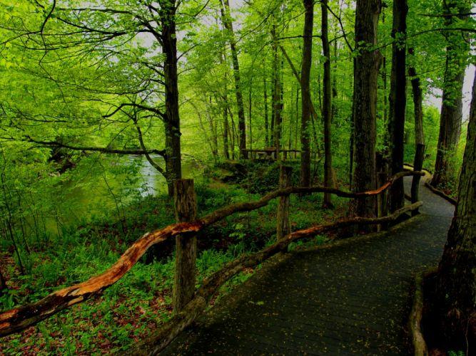 forest road landscape e wallpaper