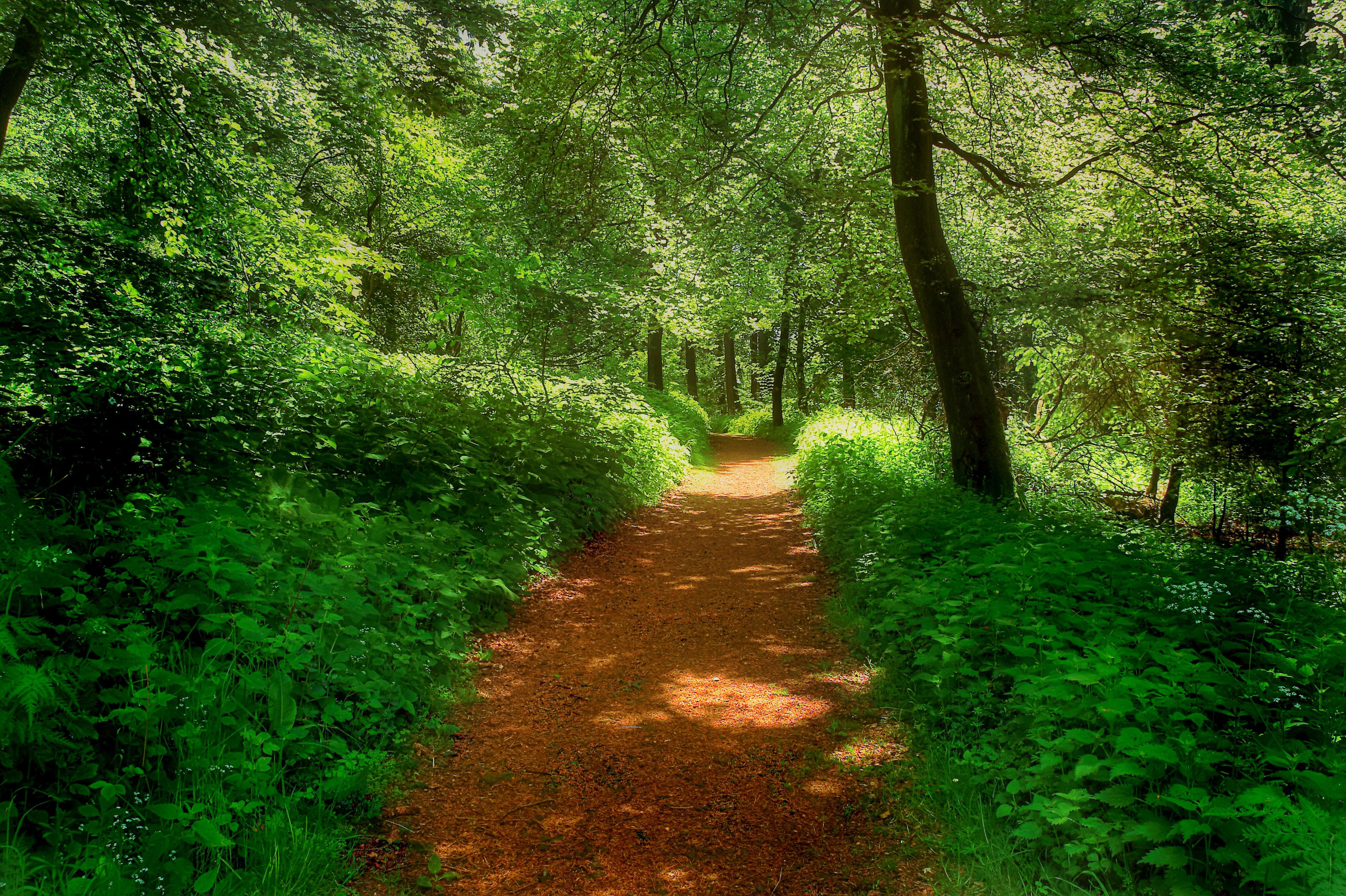 Forest road landscape wallpaper | 4269x2843 | 171976 ...