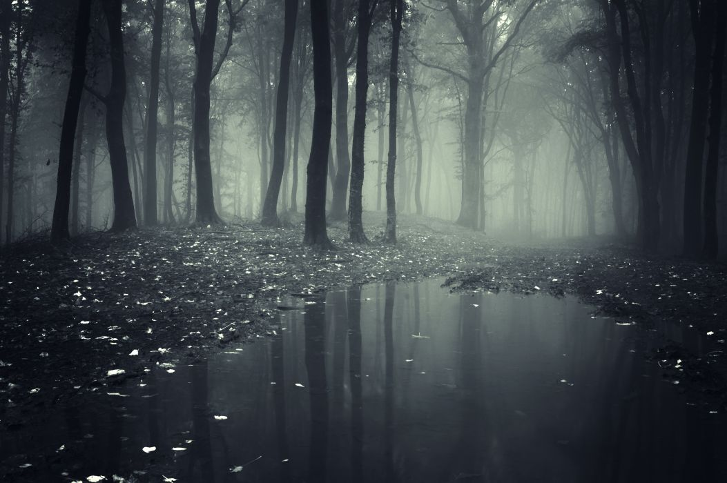 Forests Fog Puddle Nature wallpaper
