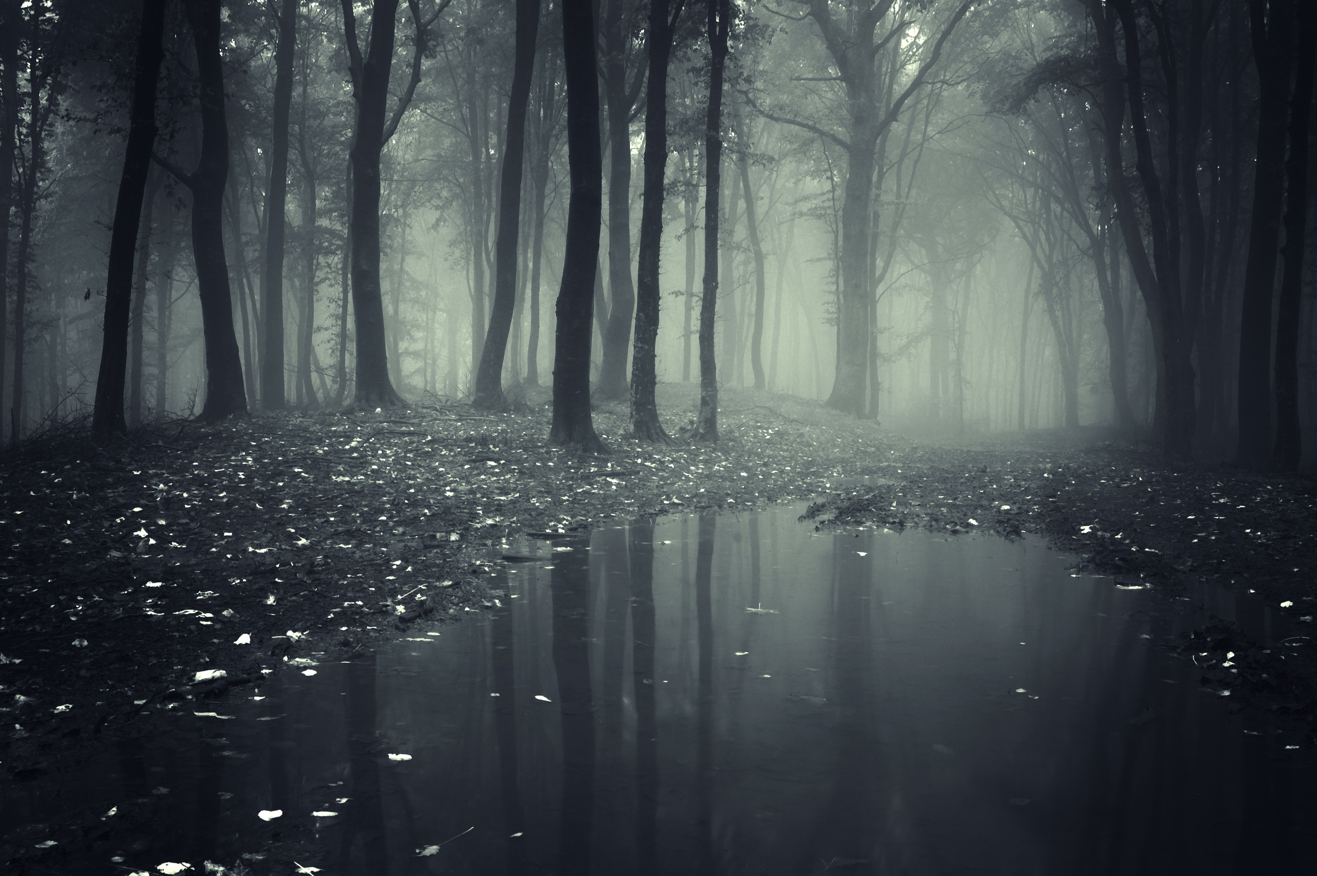 Forests Fog Puddle Nature wallpaper | 4500x2992 | 171978 ...