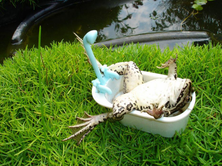 Frogs Toys Grass Bathroom Humor Animals wallpaper