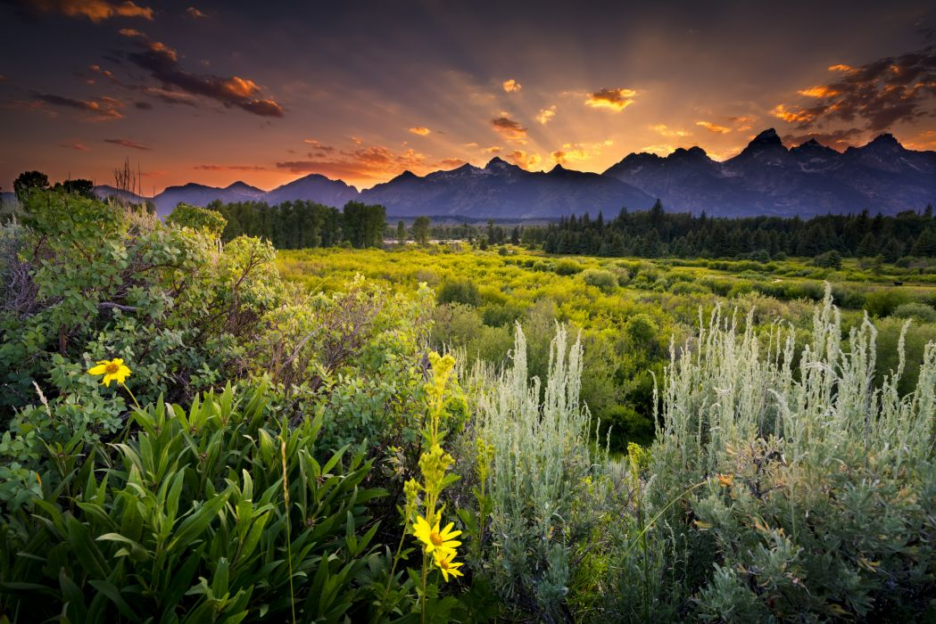 Grand Teton National Park sunset clouds evening mountains field flowers herbs woods trees pine trees wallpaper