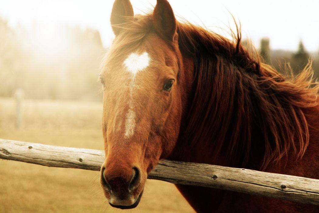 Horses Head Animals wallpaper