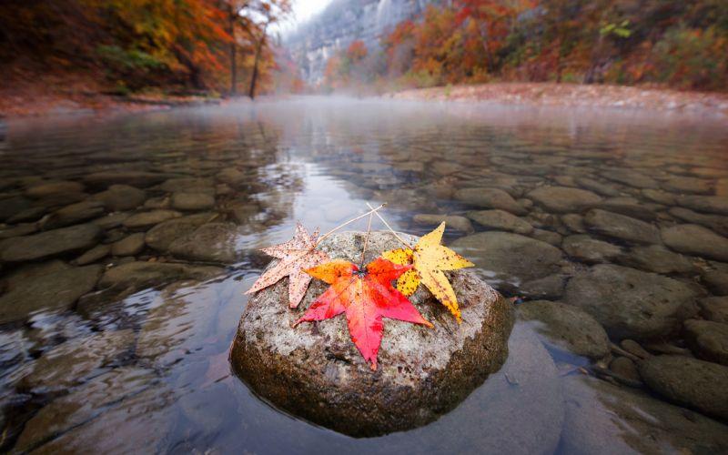 Leaves River Rocks Stones Autumn wallpaper