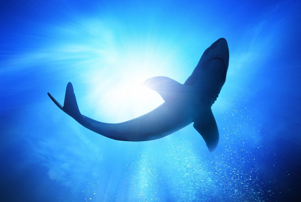 water sun bubbles shark sea wallpaper
