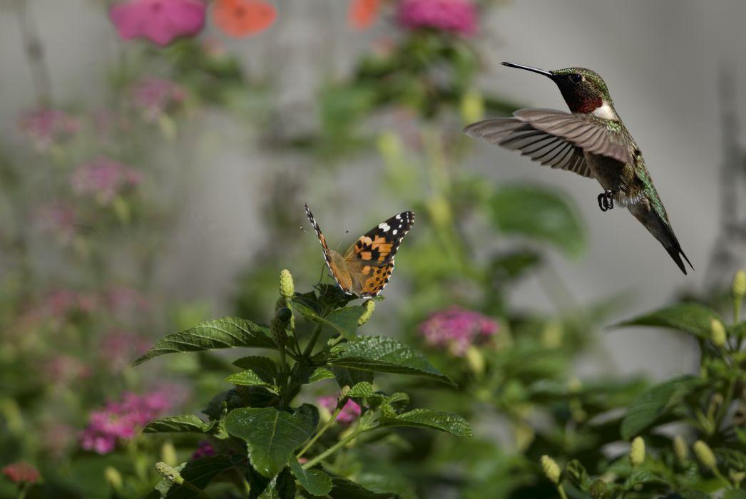 flowers butterflies birds hummingbirds insects sun bokeh     j wallpaper