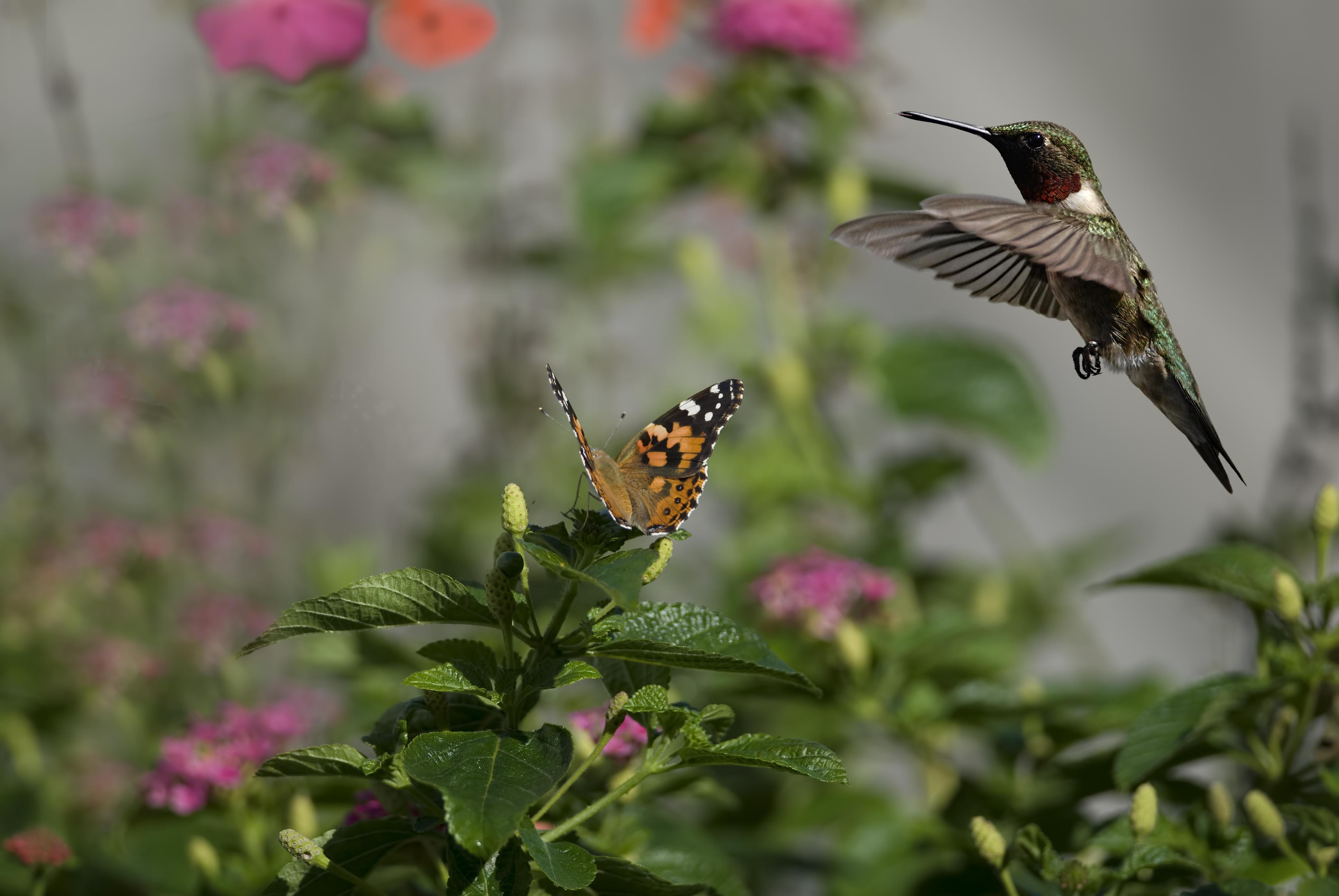 flowers butterflies birds hummingbirds insects sun bokeh j