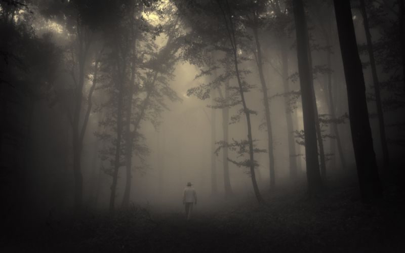 forest trees creepy nature landscape misty lonely old man road mood wallpaper