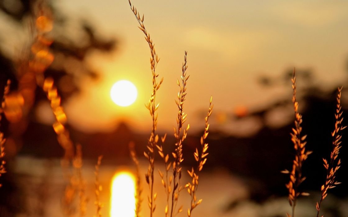 macro plant plants ears light sun sunset blur bokeh    g wallpaper