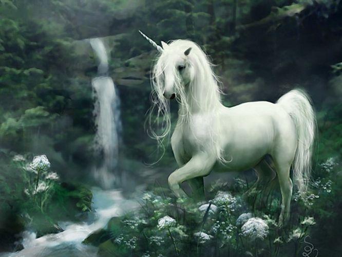 unicorn horse magical animal d wallpaper