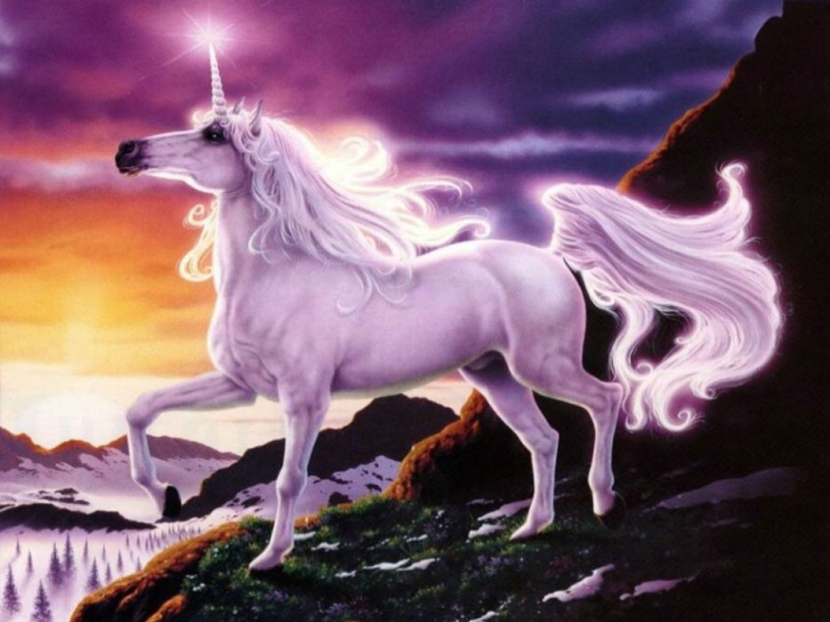 unicorn horse magical animal   5 wallpaper